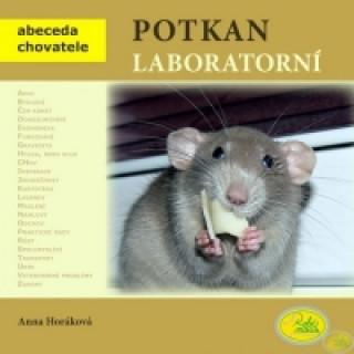 Potkan laboratorní
