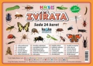 Sada 24 karet Zvířata hmyz