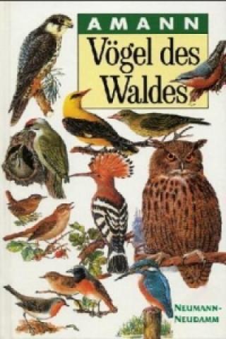 Carte Vögel des Waldes Gottfried Amann