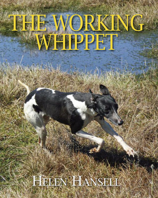 Working Whippet