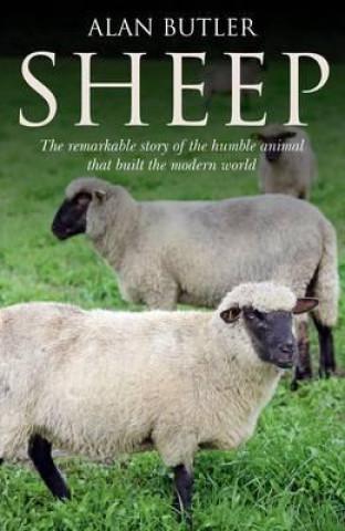 Carte Sheep Alan Butler
