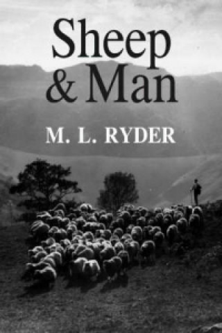 Sheep and Man