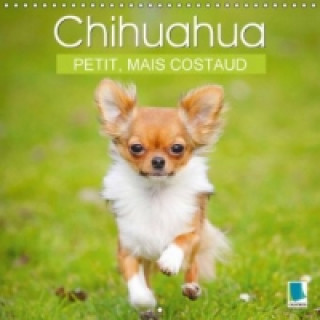 Chihuahua : petit, mais costaud (Calendrier mural 2015 300 × 300 mm Square)