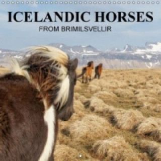 ICELANDIC HORSES from BRIMILSVELLIR (Wall Calendar 2015 300 &times 300 mm Square)