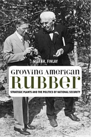 Growing American Rubber