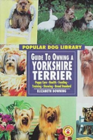 Guide to Owning a Yorkshire Terrier