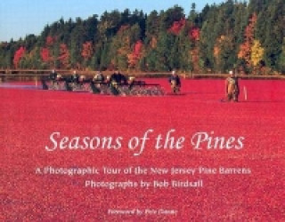 Seasons of the Pines
