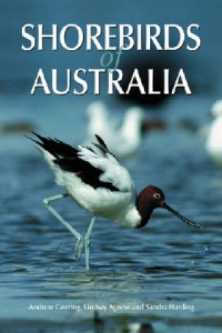 Shorebirds of Australia