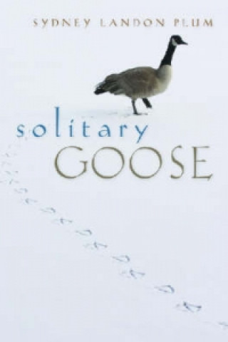 Solitary Goose