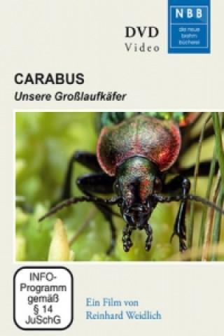 Carabus, 1 DVD