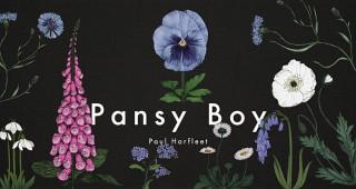 Pansy Boy